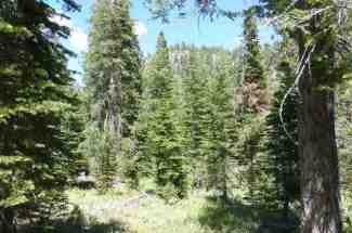 Rare 16.5 acres in Squaw Valley