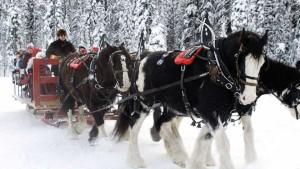 media_horse-sleigh-ride